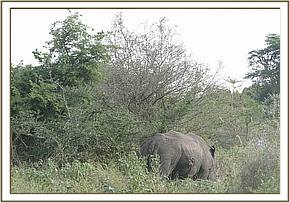 Identifying the Rhino for treatment