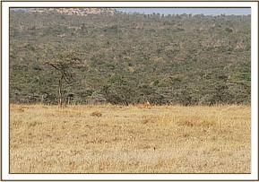 Identifying the Hartebeest for transportation