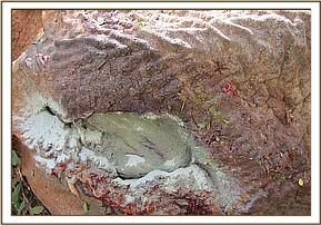 The wound after treatment