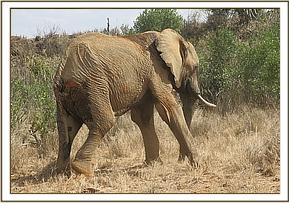 e are hopeful this elephant will recover fully after treatment