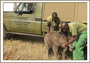 The orphan beside the mobile veterinary unit vehicle