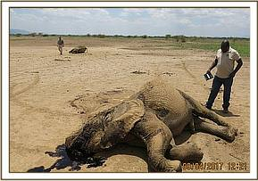 Two elephants died from mysterious circumstances