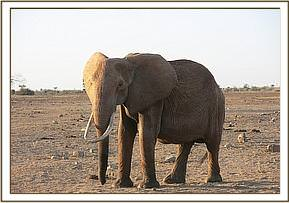 This elephant was seen severely emaciated