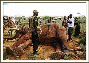 Treating the elephant
