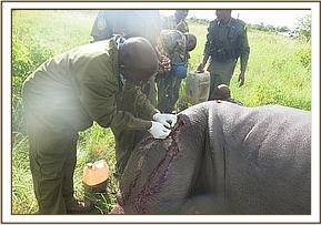 Taking a sample from Bahati's lesion