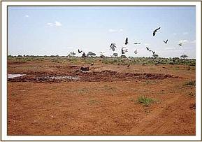 Birds circling the dead elephants carcass