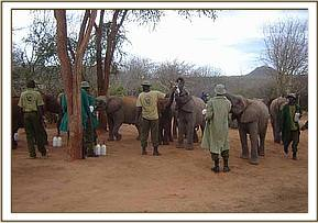 The Nursery orphans meet the Ithumba orphans