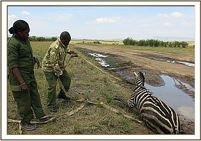 removing the zebra from the mud