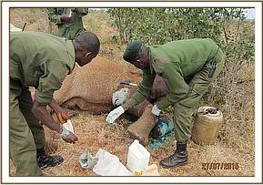 The team apply green clay after cleaning the wounds