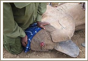The elephants injury