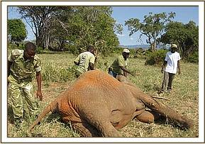 The team ensures the mother is lying in a satisfactory position