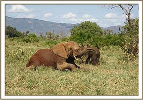 After finishing the treatment, the mother and baby wake up after being given the revival drug