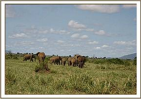 The calf and mother leave the scene with the herd who waited protectively after leaving the scene