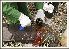 The wound is cleaned and treated