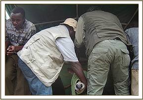 Translocation of female Waterbuck