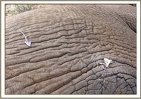 The arrow is removed and the wound treated