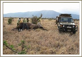 The mobile vet unit treats the injury