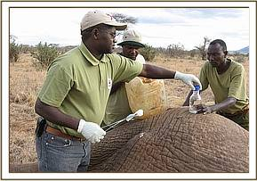 Dr Ndeereh treats the arrow  wound