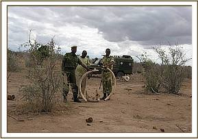 The team with daed elephant remains