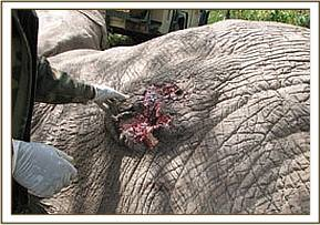 The wound before the second treatment