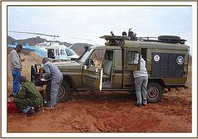 The vet unit helping the KWS with the ear notching of the Rhinos in Tsavo West National Park