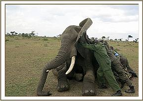 Pushing the elephant onto its side