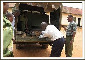 The duiker in the back of the vets vehicle