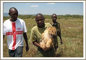 One of the captured cubs