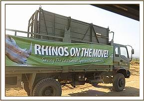 Transporting the rhinos