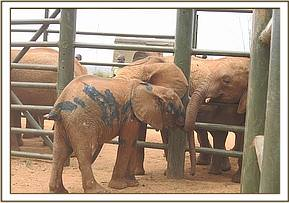 The orphan meets the DSWT Voi orphans who offer thier support
