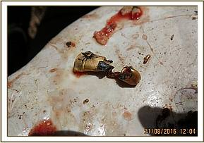 A bullet is recovered from the carcass