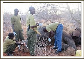 Treating the wounded elephant
