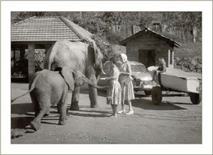 Fatuma, and Sampson and Daphne Sheldrick with little Higgelty following behind -1961
