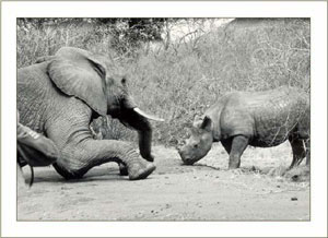 Sampson playing with his friend Rufus 1964