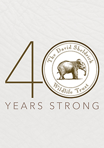 DSWT 40 Years Strong