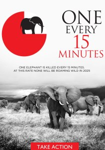 The DSWT iWorry Campaign
