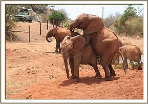 Shimba riding on Taveta's back
