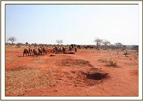 Orphans encounter a wild group at the waterhole