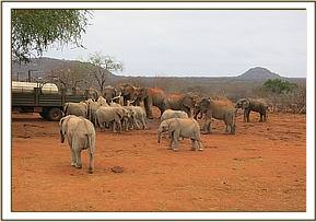 Orphans and wild elephants