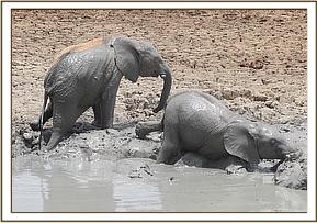 Kitirua and Ololoo getting out of the mudbath
