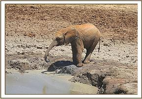 Kandecha contemplating a mudbath