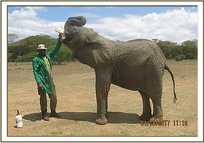 Murera and Keeper at feed time