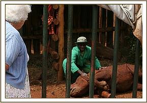 Dame Daphne Sheldrick checks on Solio