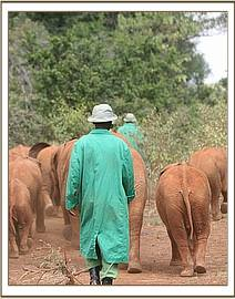 Orphans & Keepers walking