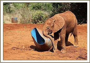 Kwale playing with the water barrel