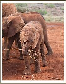 Barsilinga playing with a stick