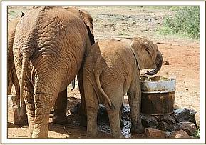 Lualeni and Makena having a drink