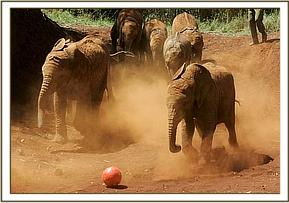 The orphans playing football