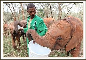 Mutara checks the milk bucket