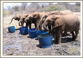 The orphans having a drink of water at midday